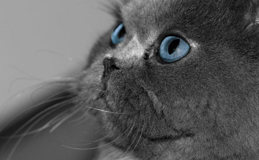 Mam grubego kota – jak go odchudzić?