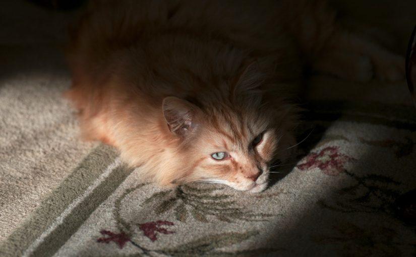 Mój kot nie chce jeść – co zrobić?