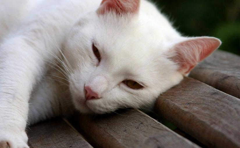 Wybór karmy dla kota – czym się kierować?